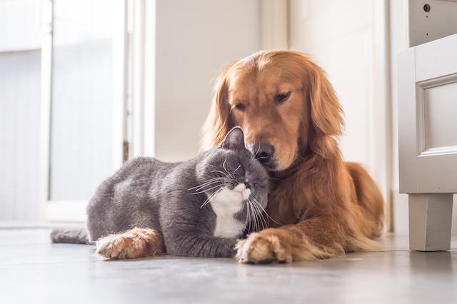 ペットやぬいぐるみ、抱き枕でも効果あり